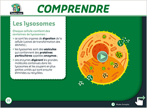 des animations maladies lysosomales